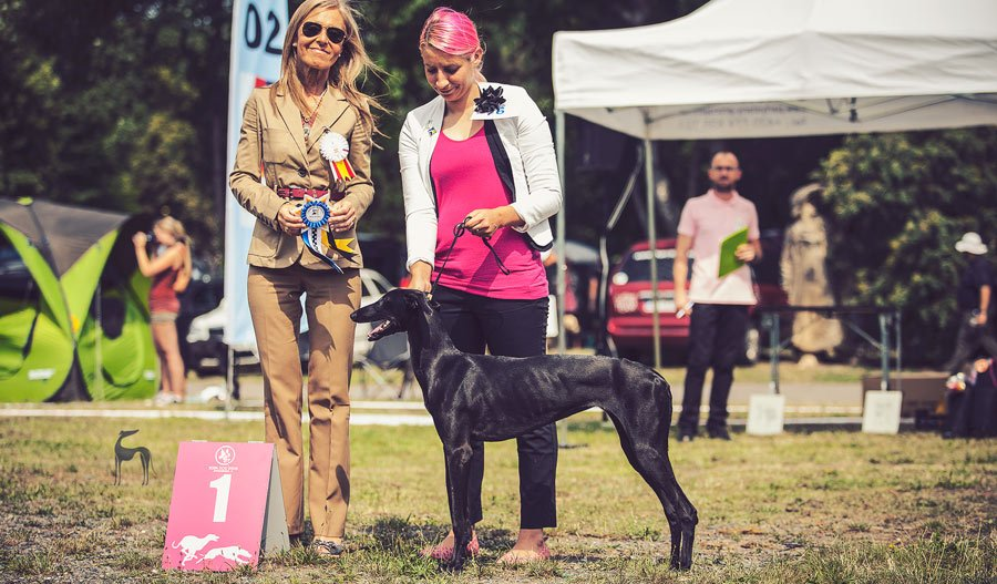 FCI Euro Sighthound 2017